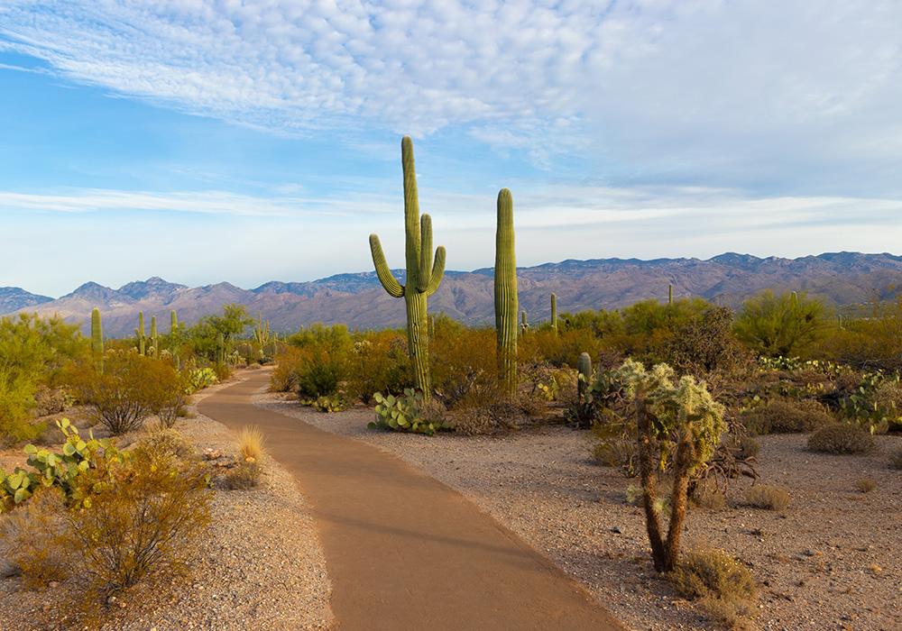 De donde vienen los cactus