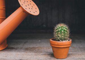 Como riego mis cactus y suculentas