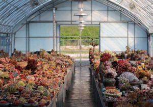 coleccionismo de cactus y suculentas