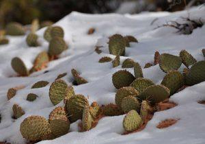 cuidar cactus con frio